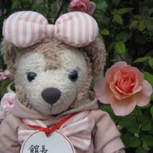 フランシスブレイズ つるデトロイター ラデュレ 他 薔薇が咲いたよ 館長シェリー より