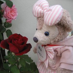 赤い薔薇 特集 薔薇のブランコ