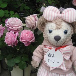 ピンクの薔薇特集 パート2 ラデュレ ローズポンパドゥール 他