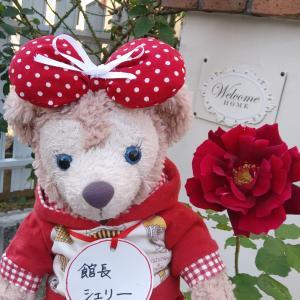 秋薔薇が咲いたよ いい香り~
