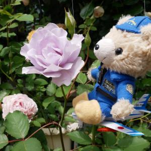 ブルーの名前がついた薔薇