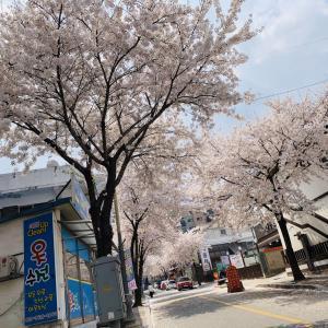 韓国 抱川(ポチョン)市 カフェ♪