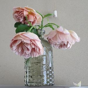 今日の切り花・薔薇(カフェ、ローズゴジャール)紫陽花
