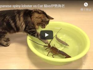 ネコの動画再生数No1は?約2億超再生のあの動画!!