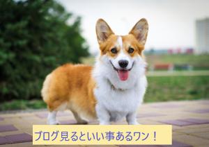 """""""犬""""の動画再生No1はまさかのあの動画"""