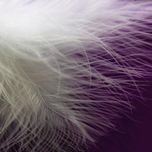 目の前に舞い降りた羽 ー天使からのメッセージー