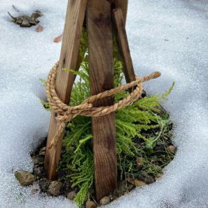 植木の雪対策