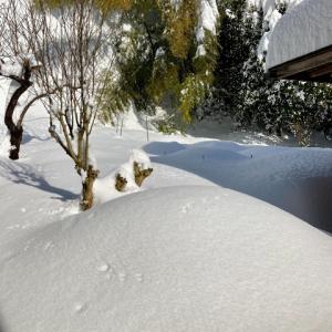 大雪のキッチンガーデン