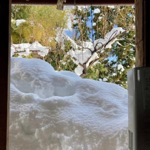 落雪とキッチンガーデン