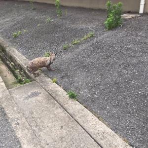 全身泥パックの犬?のこととか・・