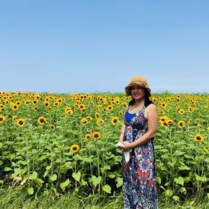 神奈川県 横須賀市 ソレイユの丘 ひまわり畑