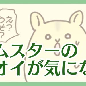 【ハム漫画035】ハムスターのニオイが気になる