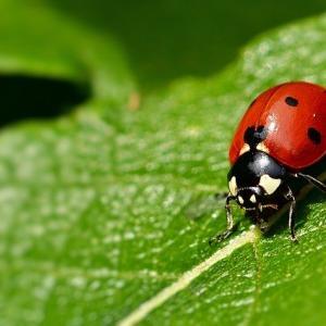 【昆虫食】コオロギだけじゃない 今後ダイエットで活用される昆虫食