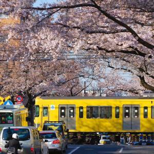 ワニの死と桜の叙情的叙景詩,春と日常への想い。