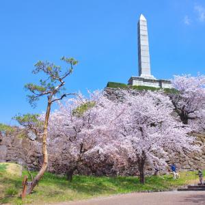 山梨観桜旅行(4):甲府城跡の桜と長禅寺と。