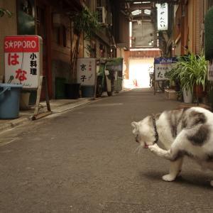 日暮里・初音小路(1):猫の居る木造アーケード。