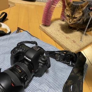 撮るのは猫だけではない。