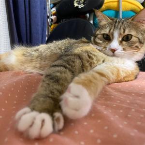 猫と寝込む日。