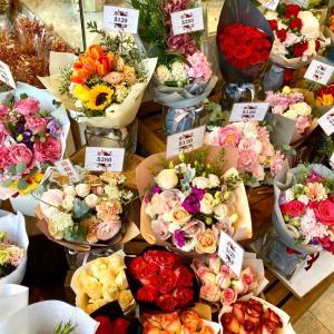 香港 お花が驚きの破格!フラワーマーケット&インコがいっぱいバードガーデン