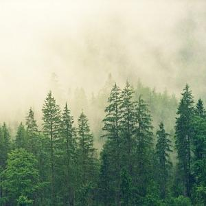「自然」は仏教用語