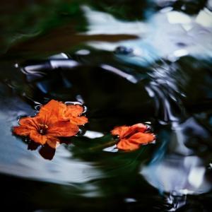 禅語「一夜落花雨 満城流水香」
