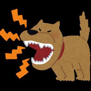 悩み多き愛犬の『吠え』
