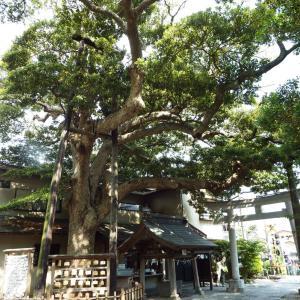 外構植栽図鑑『タブノキ』耐潮性に優れた便利樹種タブノキの植栽における特徴とは  一宮市外構ノエル
