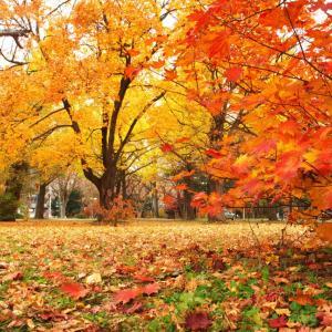 外構植栽図鑑『イチョウ』秋を代表する落葉樹イチョウの植栽における特徴とは |一宮市外構ノエル