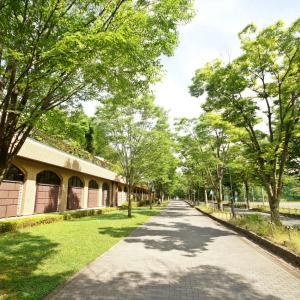 外構植栽『ケヤキ』上方にかけて広がっていく樹形を持つ広葉樹ケヤキの特徴とは