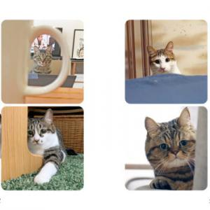 全キジトラ猫好き必見!『キジトラ猫だけ!』キジトラ猫好きのための、キジトラ猫オンリー写真集が発売!