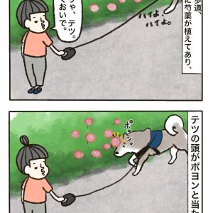 芍薬の花と蝶とテツ
