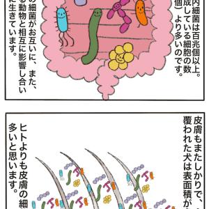 私の「腸内細菌改善」のイメージ(相当意訳してます)
