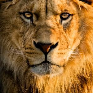 なぜ水瓶座の時代には獅子座が必要とされるのか?