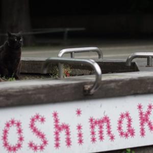 池袋ネコ歩きminiなカメラ散歩。【池袋一丁目〜東池袋〜雑司ヶ谷】