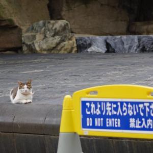 池袋ネコ歩きminiなカメラ散歩。【池袋一丁目〜東池袋】