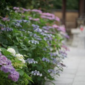 池袋ネコ歩きminiなカメラ散歩。【南池袋〜雑司ヶ谷〜目白台・高田】