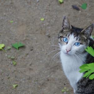 池袋ネコ歩きminiなカメラ散歩。【池袋一丁目〜上池袋〜北大塚〜東池袋】