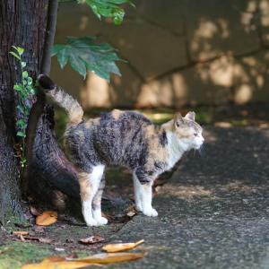 池袋ネコ歩きminiなカメラ散歩。【南池袋〜雑司ヶ谷〜高田〜目白〜西池袋】