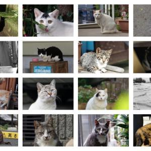 【150回記念】池袋ネコ歩きminiなカメラ散歩。【猫塗れ大集合!】