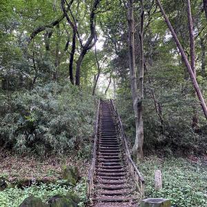 雨上がりの緑地の坂道を登ったり下ったり