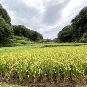 小山田緑地を起点に周辺の里山ラン