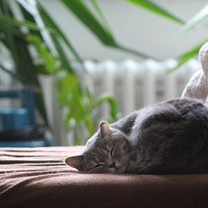 カラダちゃんは寝ている間に修復してくれている