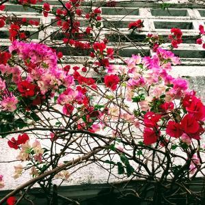 沖縄のお墓のしきたりと親戚への初挨拶~志村けんのあれの生みの親!?~