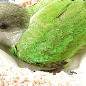 ママ手作り鳥の巣
