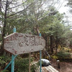 【甲武信ヶ岳(西沢渓谷ー徳ちゃん新道ー雁坂峠で周回)④】雁坂峠まで小さなアップダウン。そして、長~い林道が続きます。