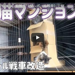 手作り猫マンションにおさまる猫可愛すぎかw|【猫マンション】猫戦車(ダンボール戦車)で猫マンションを作りました。I made a cat apartment using a part of the cat tank.