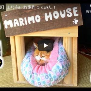 猫のために頑張るお兄さんたちが可愛い 【猫小屋】まりもにお家作ってみた!
