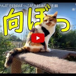 猫「お日様ぽかぽか…」|なんだかんだで日向ぼっこが大好きな三毛猫