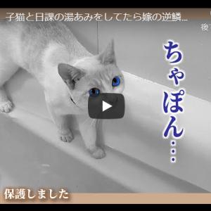 お風呂で子猫と戯れる主|【悲報】子猫と日課の湯あみをしてたら嫁の逆鱗に触れました