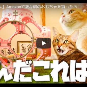 1時間半かけて組み立てた玩具に猫ズは… 【嘘やん】Amazonで変な猫のおもちゃを買ったらマジでなんだこれは……